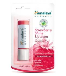 Balsam do ust w sztyfcie truskawkowy 4,5g /Himalaya